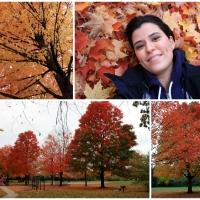 Destino dos Sonhos: Outono no Hemisfério Norte